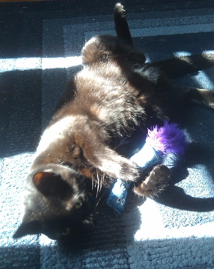 Pyewacket enjoying the sunshine
